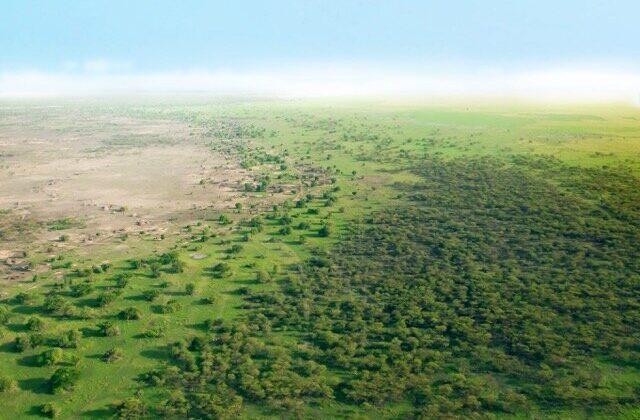 La Gran Muralla Verde de África está dando Resultados